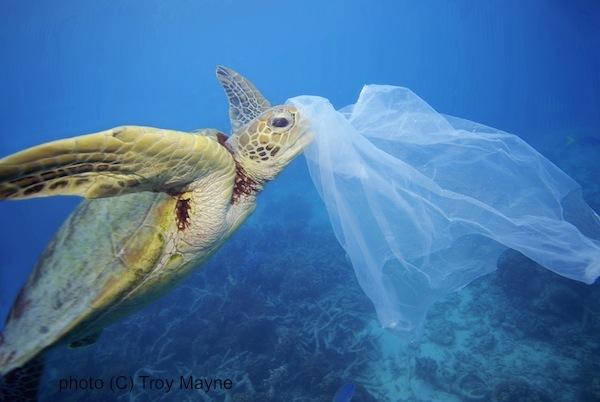 GRN_plasticbag_Australia_TroyMayne_web