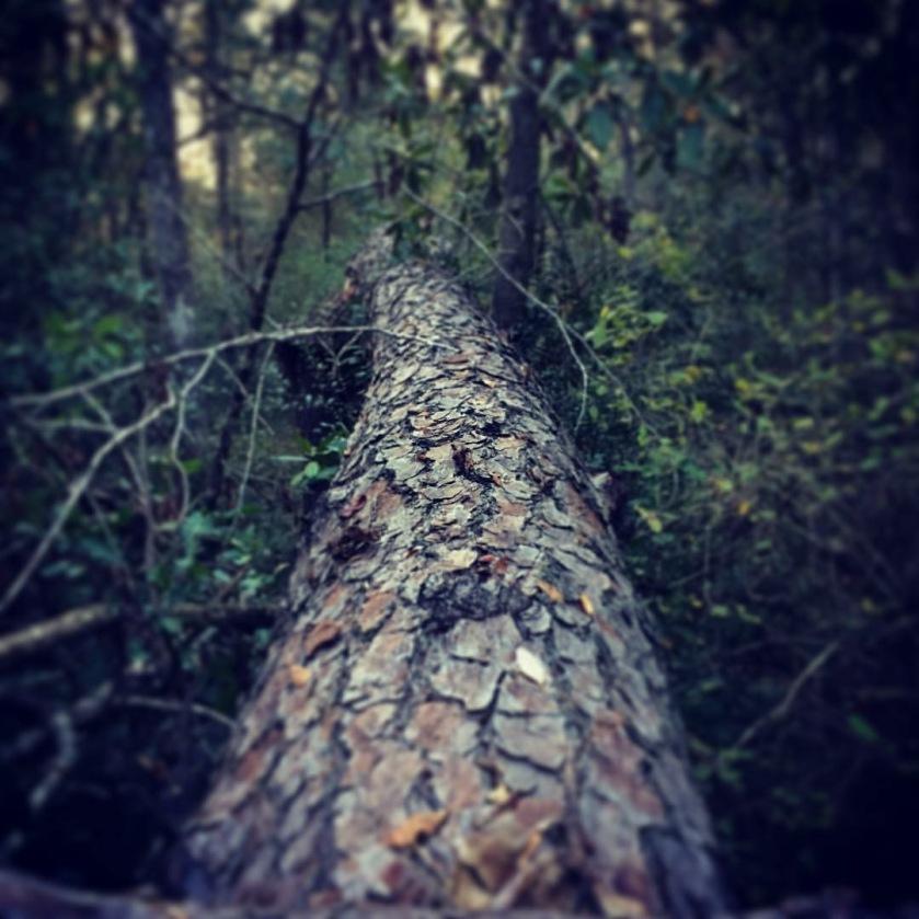 tommy tona fallen tree 2016